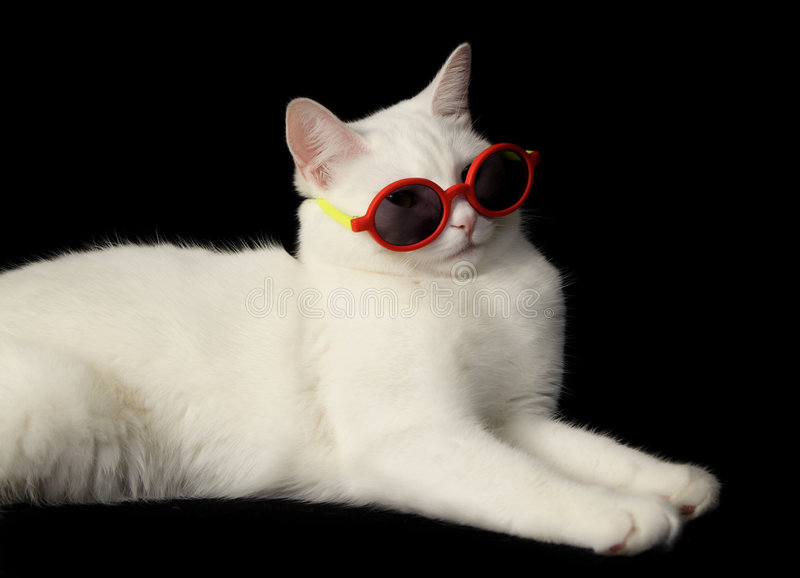 Gatto bianco con gli occhiali da sole fotografia stock libera da diritti