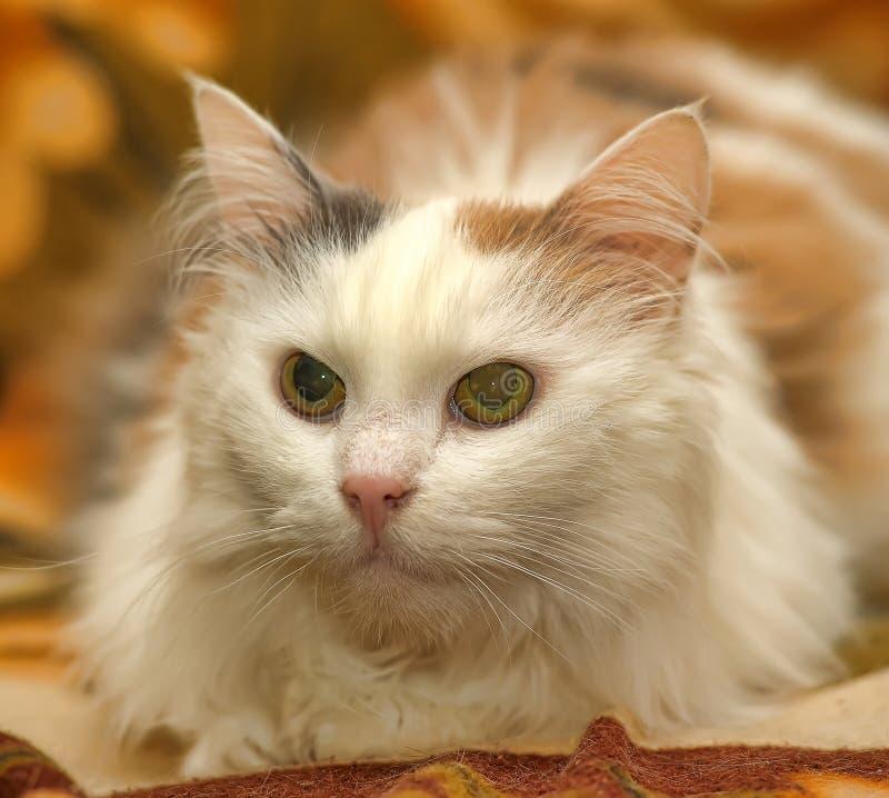 Gatto bianco con i punti rossi e grigi immagine stock libera da diritti