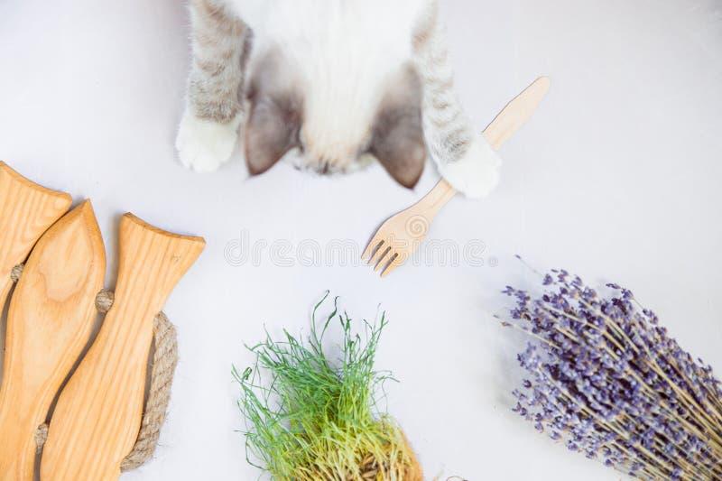 Gatto bianco con la forcella di legno di eco davanti alla disposizione piana della cima dell'erba immagini stock libere da diritti