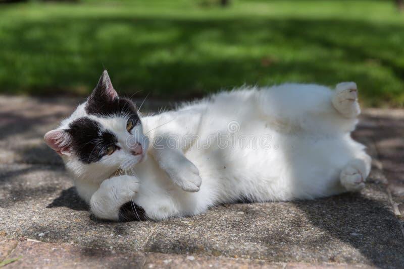 Gatto in bianco e nero che dorme in un giardino fotografia stock