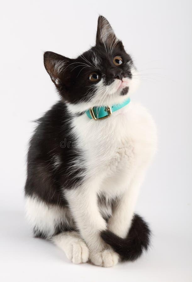 Gatto in bianco e nero che si siede da solo fotografia stock libera da diritti