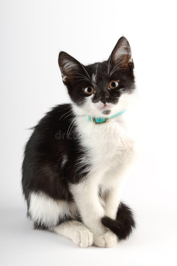 Gatto in bianco e nero sveglio che si siede da solo fotografia stock libera da diritti