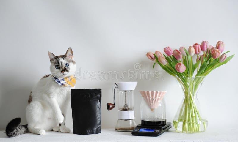 Gatto bianco favorito e caffè fare in dispositivo di gocciolamento di origami Smerigliatrice manuale, scala, tulipani Pacchetto n fotografia stock libera da diritti