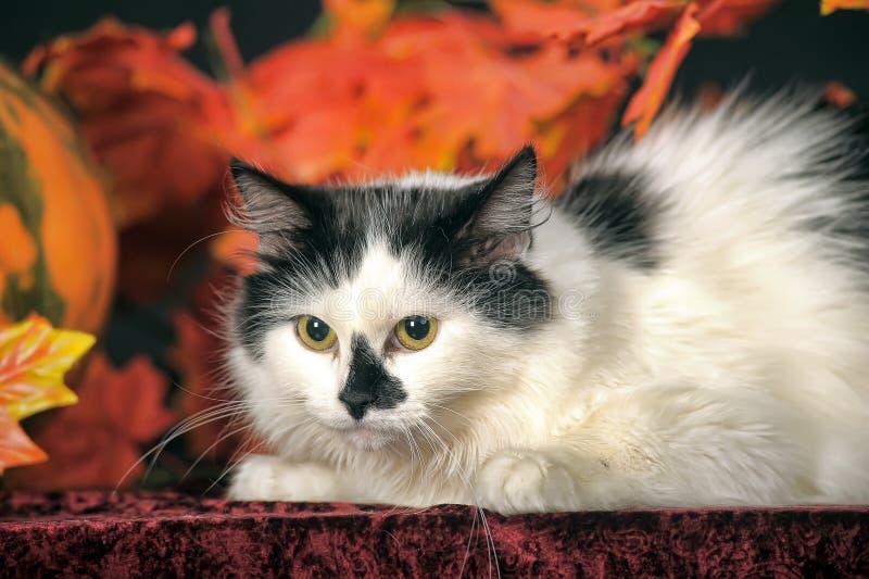 Gatto bianco lanuginoso con i punti neri su un fondo delle foglie di autunno immagine stock