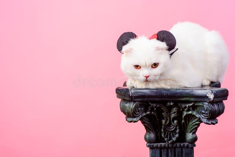 Gatto bianco in orecchie di topo, spazio della copia pets Conservi gli animali puro e igiene Cat Allergy Pelliccia naturale Bei p immagini stock libere da diritti