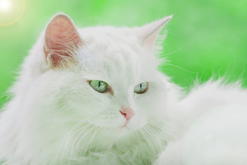 Gatto bianco su fondo verde immagine stock