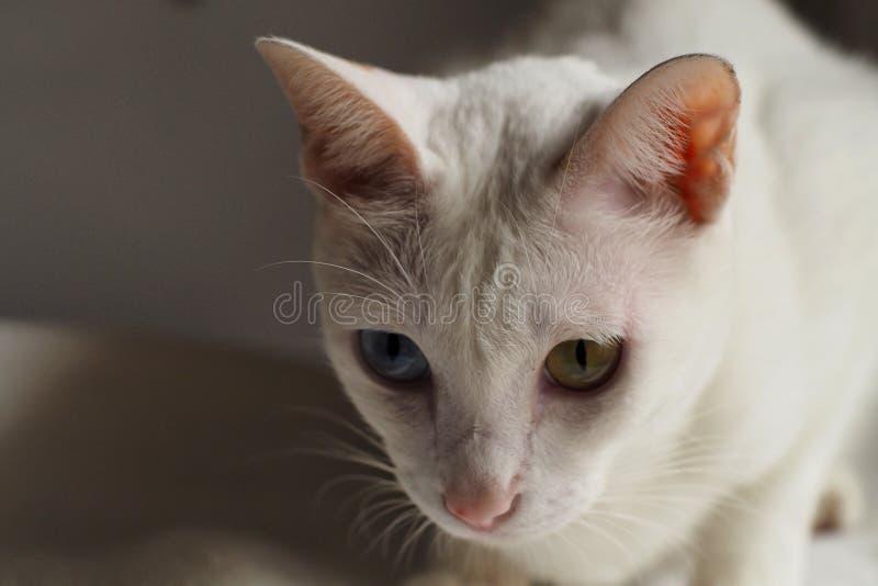 Gatto bianco sulla festa bianca del letto insieme immagini stock