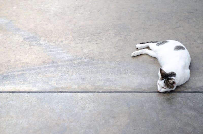 Gatto bianco sveglio sul pavimento fotografia stock libera da diritti