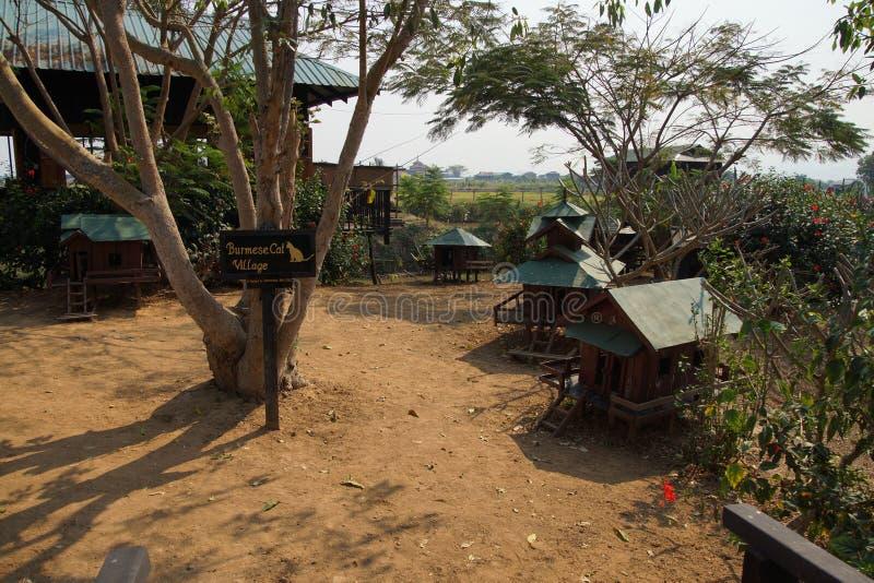 Gatto birmano di razza immagine stock libera da diritti