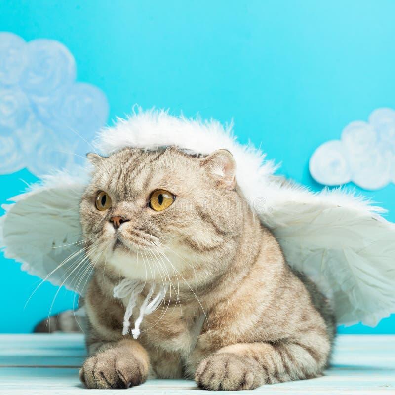 Gatto britannico con le ali, il Natale ed il nuovo anno di angelo immagine stock