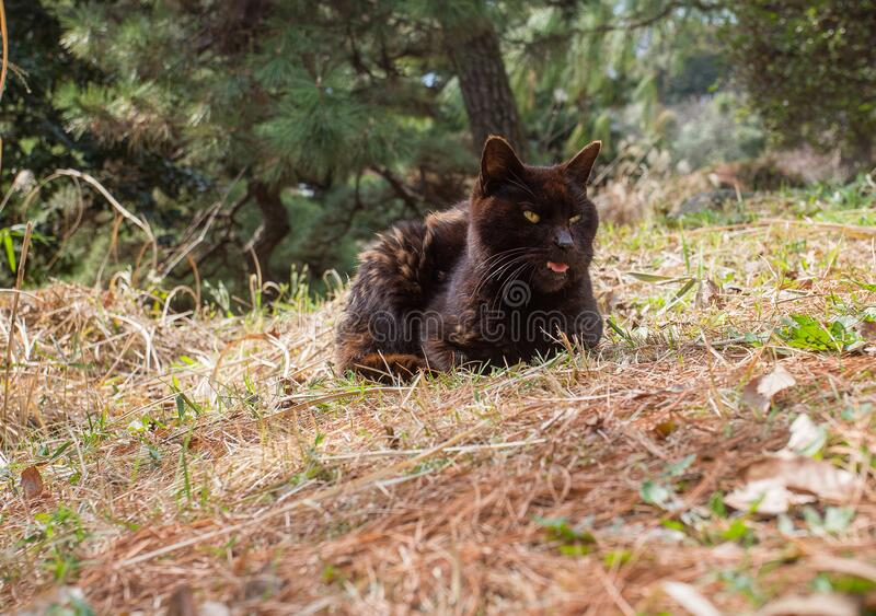 gatto bruno Awe nel giardino botanico Koishikawa di Tokyo immagini stock libere da diritti