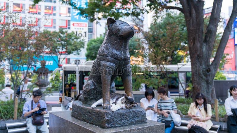 Gatto che dorme sotto Hachiko la statua commemorativa del cane davanti alla stazione di Shibuya immagini stock