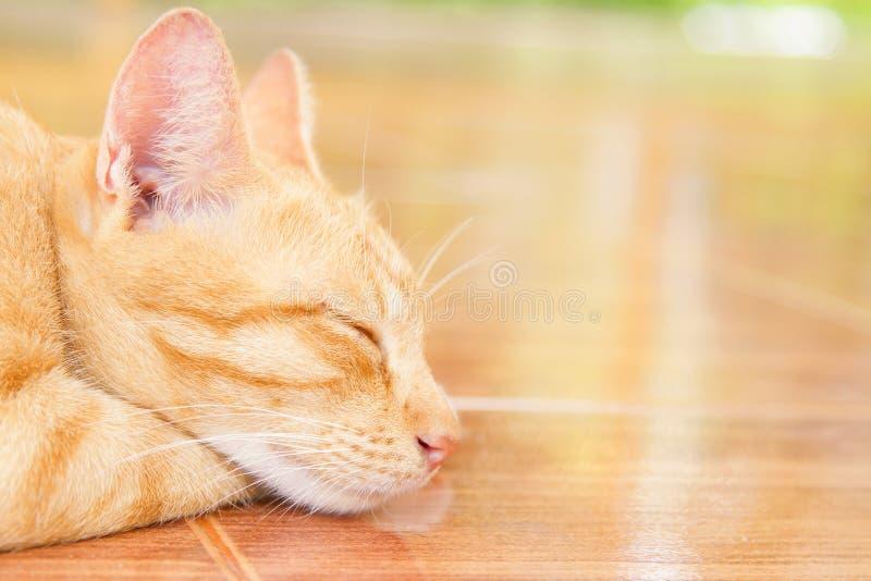 Gatto che dorme su una pavimentazione in piastrelle arancio fotografia stock libera da diritti