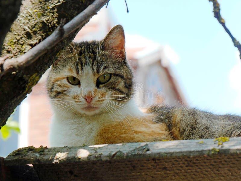 Gatto che dorme sul tetto, prendente il sole al sole e prendente il sole immagine stock libera da diritti