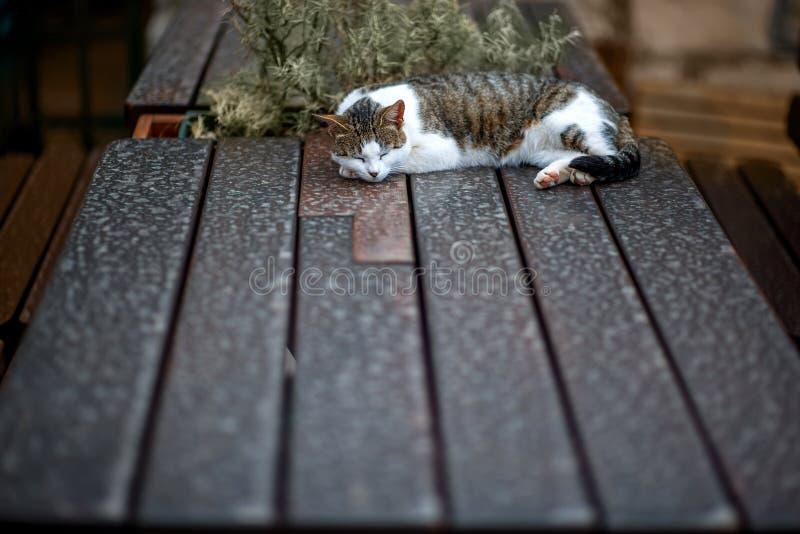 Gatto che dorme sulla tavola immagini stock libere da diritti