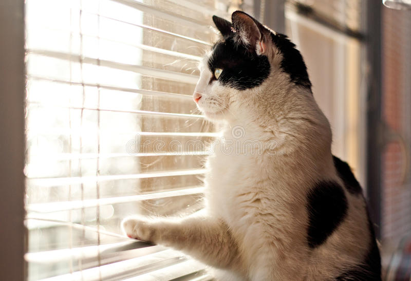 Gatto che esamina la finestra fotografie stock libere da diritti