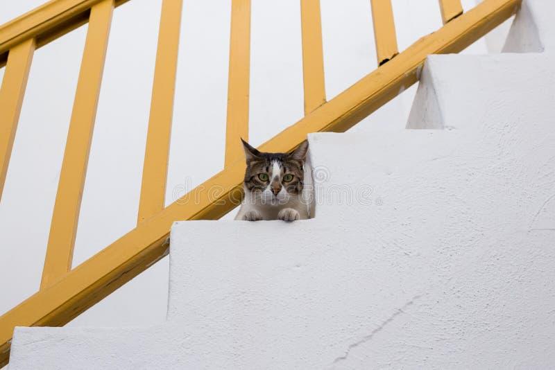Gatto che esamina la macchina fotografica dalle scale fotografia stock