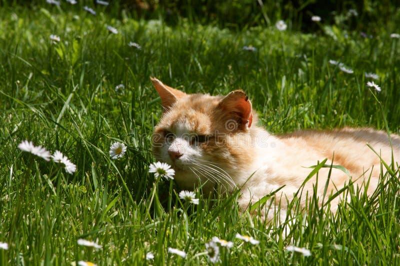 Gatto che fiuta il fiore immagine stock