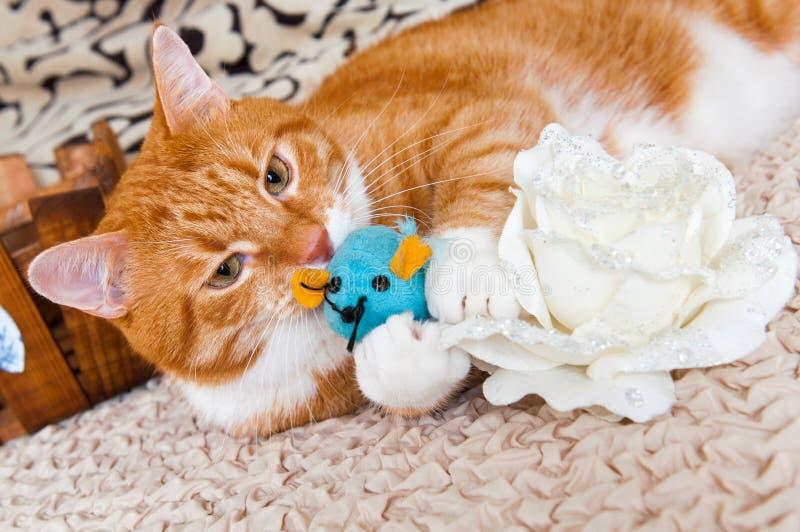 Gatto che gioca con il topo del giocattolo immagine stock