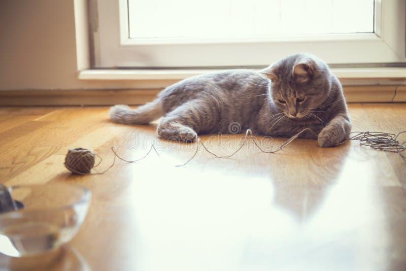 Gatto che gioca con una palla di corda fotografie stock libere da diritti