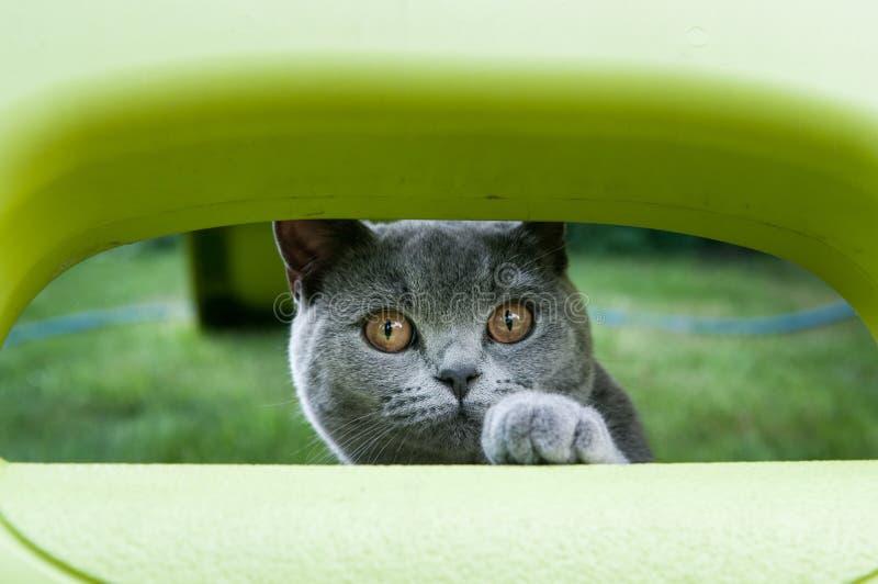 Gatto che gioca fuori nel giardino fotografie stock