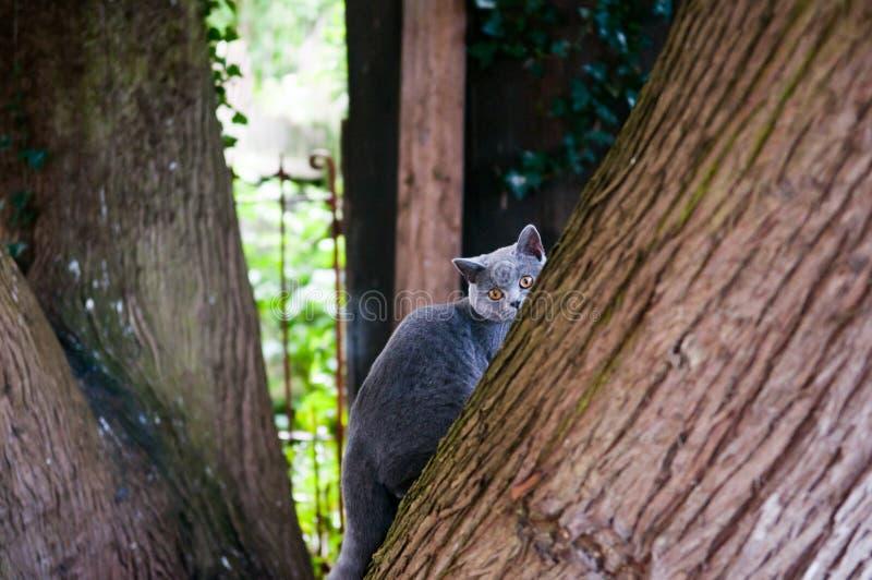 Gatto che gioca fuori nel giardino immagini stock