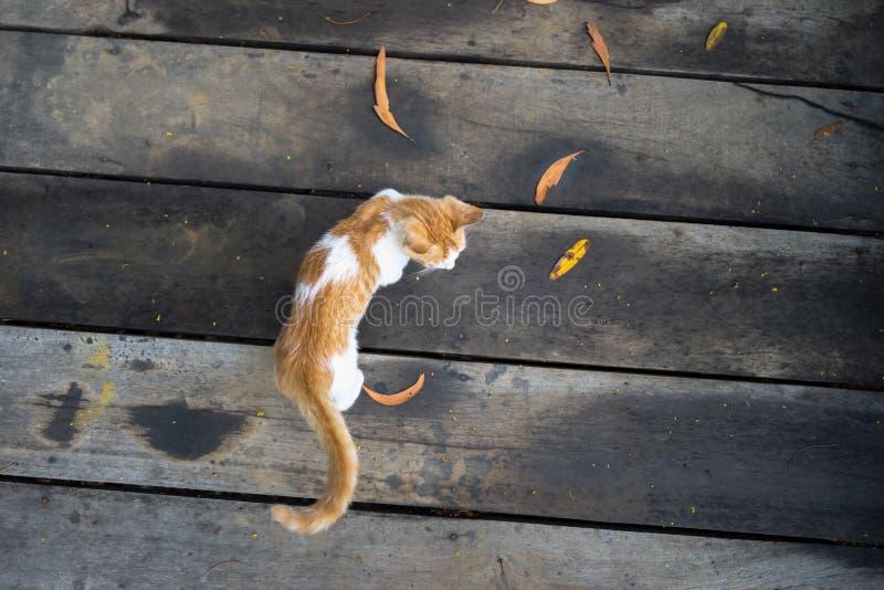 Gatto che gioca sul pavimento fuori nel parco fotografia stock libera da diritti