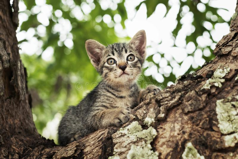 gatto che gioca sull'albero immagini stock libere da diritti