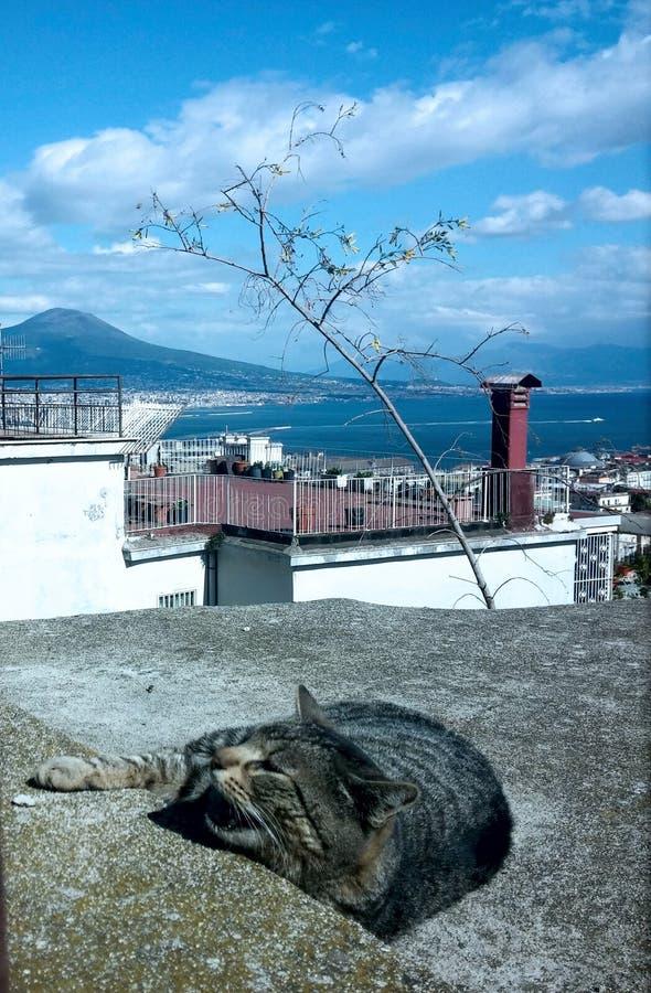 Gatto che gode del sole a Napoli immagine stock libera da diritti