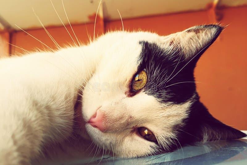 Gatto che gode della vita fotografie stock libere da diritti