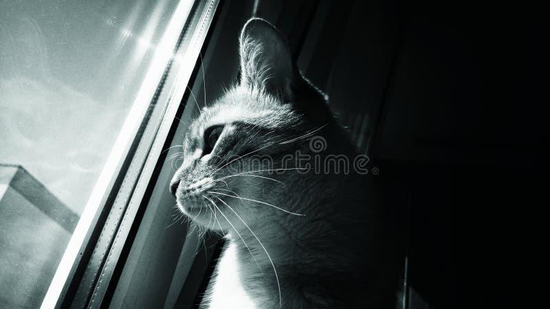 Gatto che guarda attraverso una finestra immagini stock libere da diritti