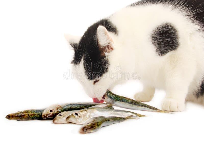 Gatto che mangia i pesci immagine stock immagine di for Pesci da laghetto mangia zanzare