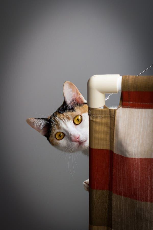Gatto che osserva giù fotografia stock libera da diritti