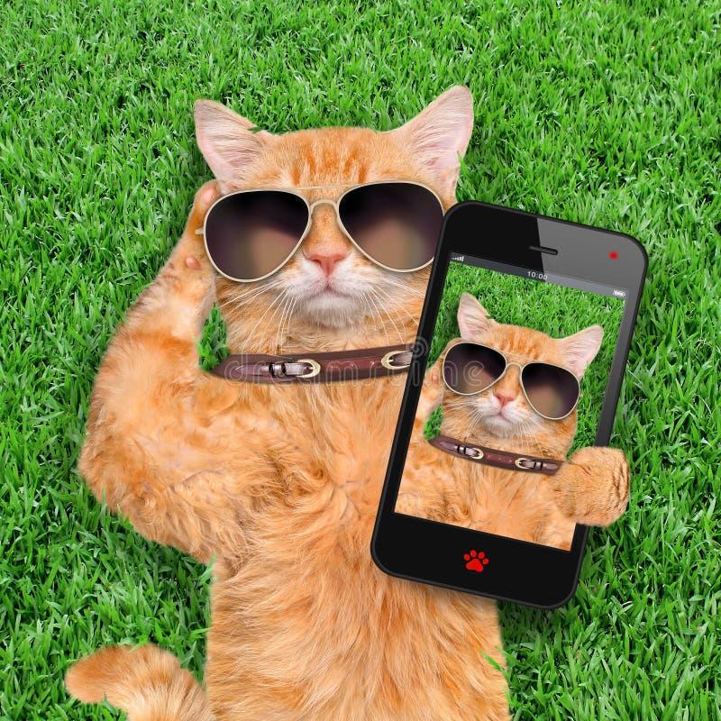 Gatto che prende un selfie con uno smartphone fotografia stock
