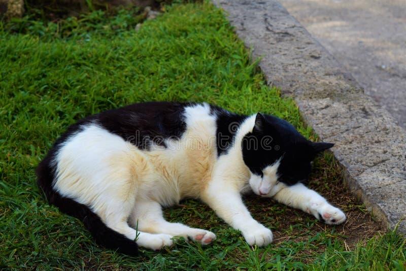 Gatto che riposa nell'erba fotografia stock