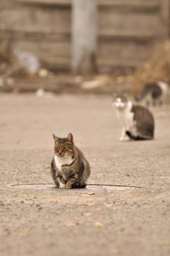 Gatto che riposa nella via fotografie stock libere da diritti