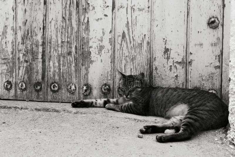 Gatto che riposa nella via fotografia stock libera da diritti