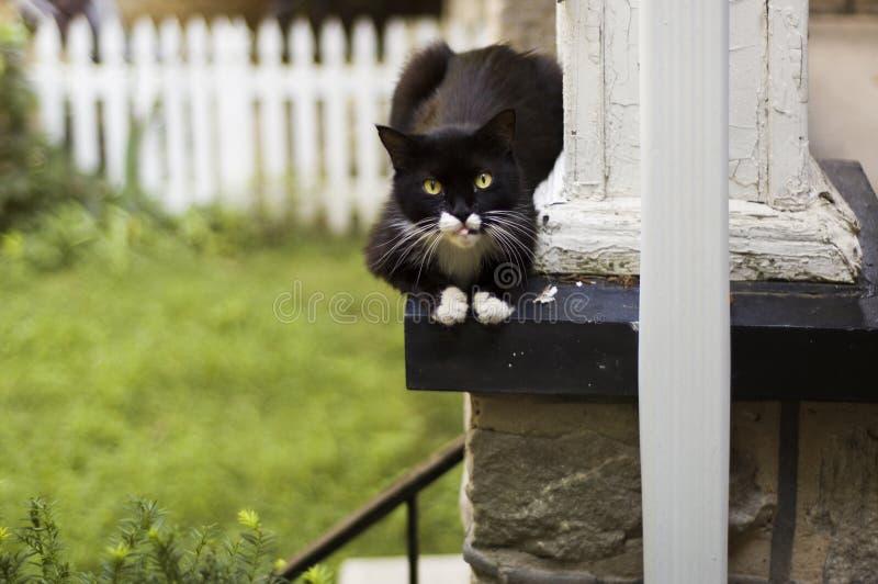 Download Gatto Che Riposa Su Un Portico Fotografia Stock - Immagine di casa, portico: 210384