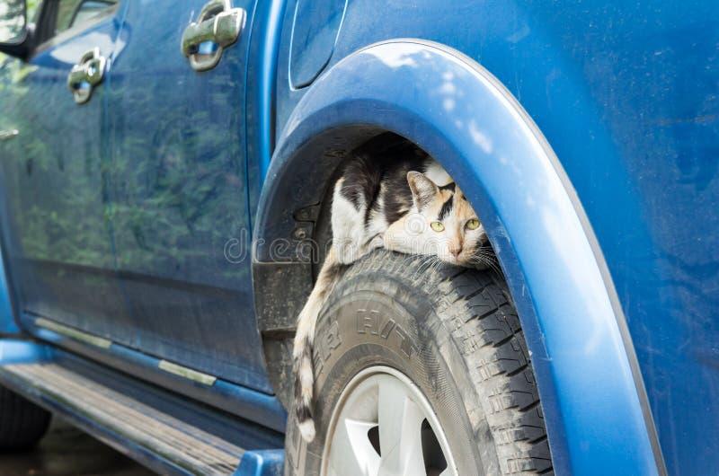 Gatto che sbircia sull'automobile della ruota fotografia stock libera da diritti