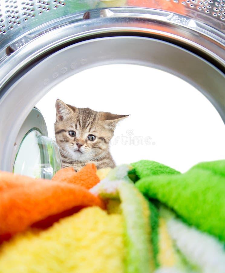 Gatto che sembra la macchina interna del lavaggio con interesse fotografie stock