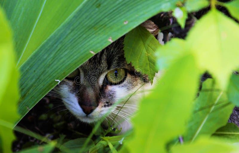 Gatto che si nasconde nei fiori! fotografia stock