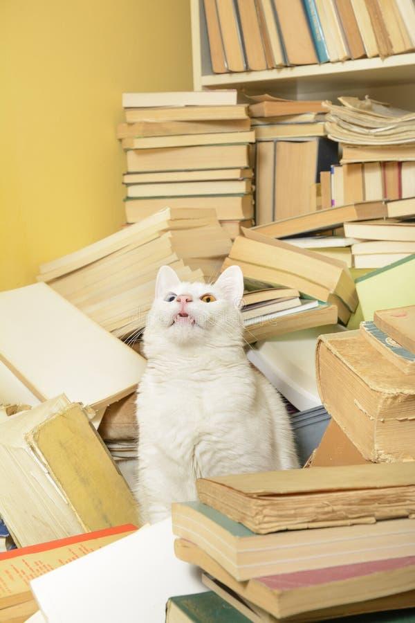 Gatto che si siede fra i libri, mostranti i suoi denti Fuoco selettivo fotografia stock libera da diritti