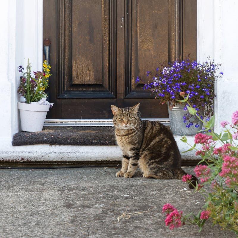 Gatto che si siede fuori di un'entrata principale immagine stock