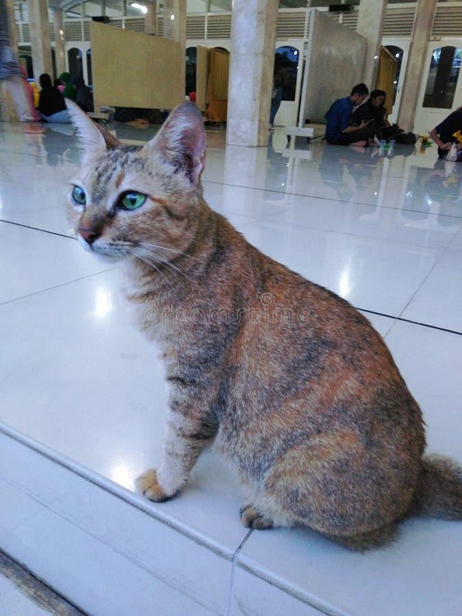 Gatto che si siede nel pavimento ceramico immagini stock