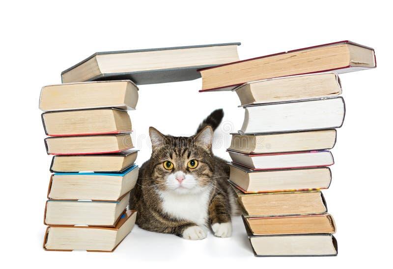 Gatto che si siede nella casa dei libri fotografie stock