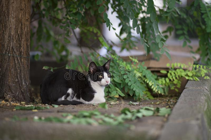 Gatto che si siede sotto l'albero, della via nuova foto 2018 immagine stock