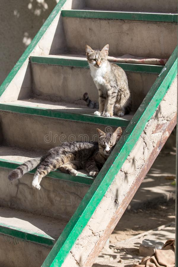 Gatto che si siede su un portico immagini stock