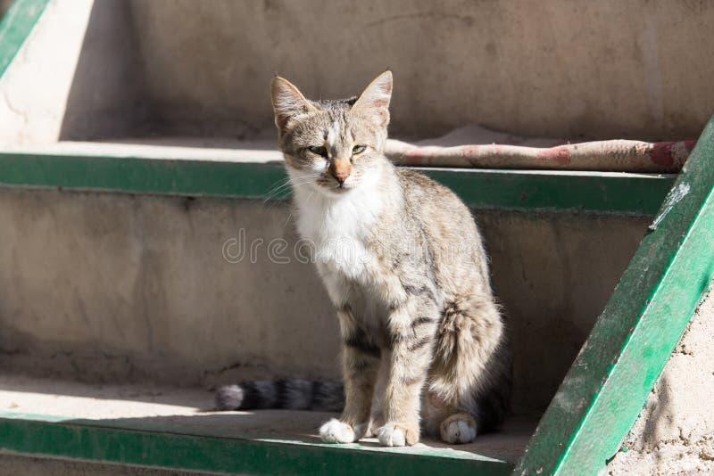 Gatto che si siede su un portico fotografie stock