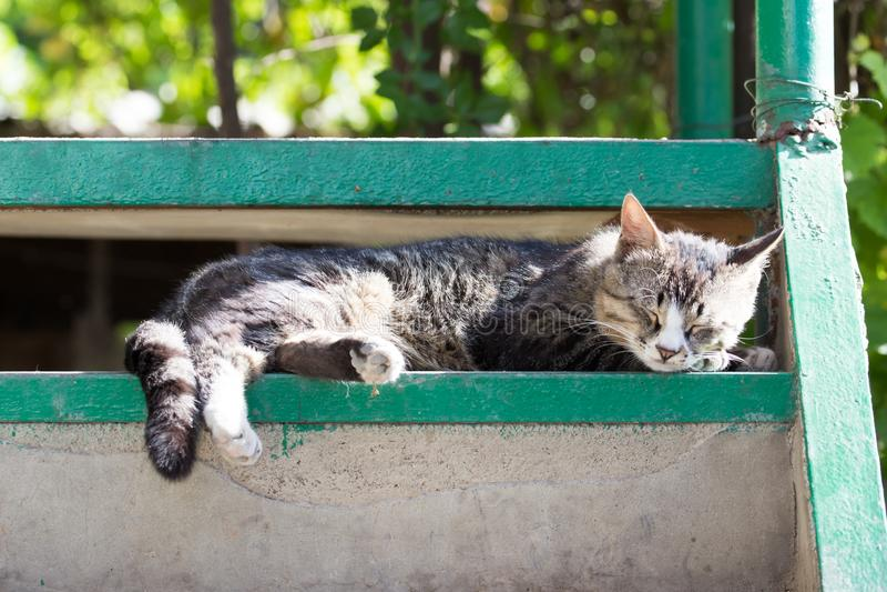 Gatto che si siede su un portico fotografia stock