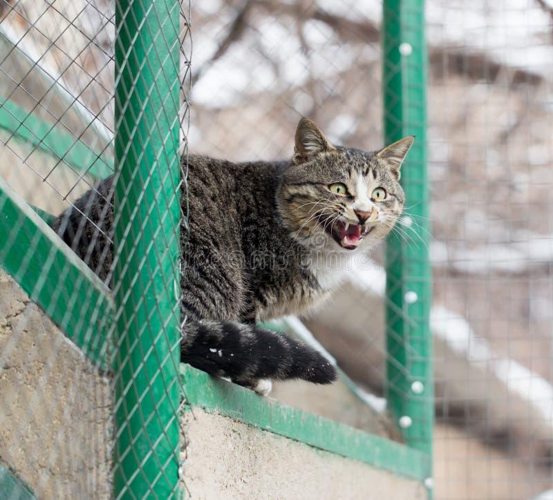 Gatto che si siede su un portico fotografie stock libere da diritti
